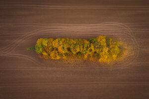 Drohnenfoto Herbstbäume auf Feld.